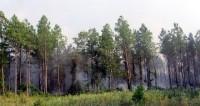 Burned area, near Ponderosa Lane.