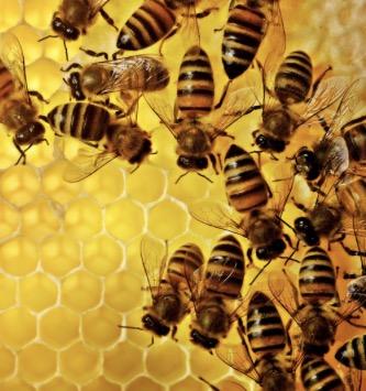 Bees  Beekeepers